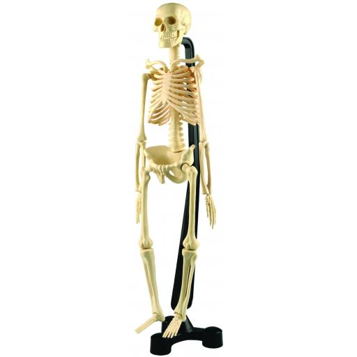 Mini Skeleton 46cm